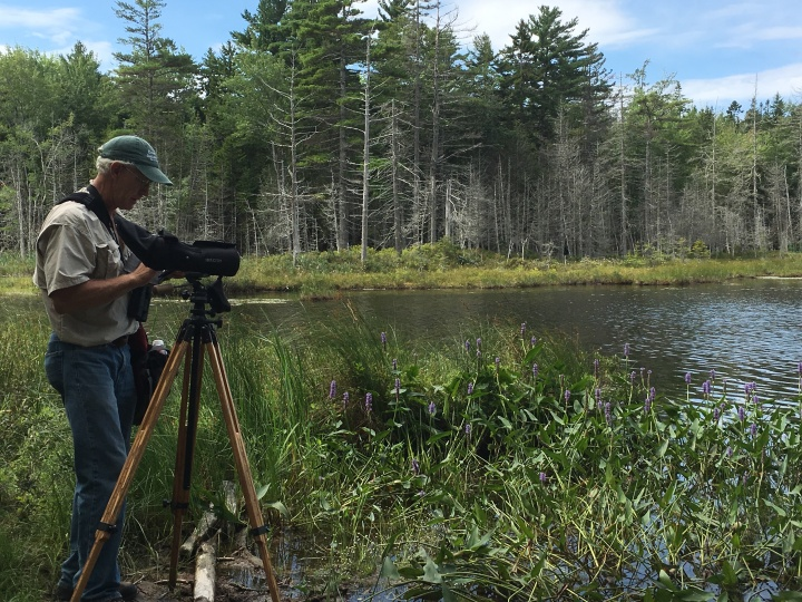 Five things I learned from birdwatching in Down EastMaine